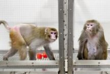 Stop Vivisection (Lab Animal Research) / by Last Chance for Animals