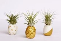 trend: pineapples / because pineapples never go out of style