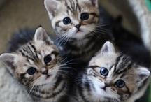 Kittens / by Marianna Férez