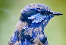 Bird Nerd / by Michelle Paschall