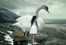 Fairy Tales~ Swans / by Merle Pace