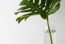 Floral & Greenery / Floral prints and flower arrangements found throughout the homes of Lonny.