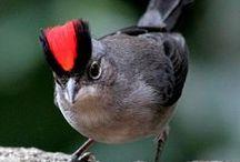 Fåglar / Birds in the world