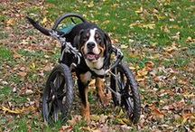 Mobility Carts for Dogs / My Pet's Brace works with Eddie's Wheels for Pets (http://eddieswheels.com) to fit and fabricate custom mobility carts for dogs who have lost or are losing the use of their legs.