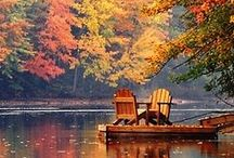 Fall: My Favorite Time of Year / by E. Lacey-Field