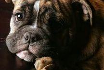 Puppy Love / by Michelle Warren