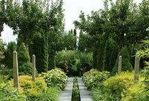 | garden | / by melissa | orangepoppy