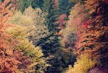 Autumn / by Al