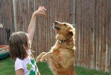 Theme | PETS / Activities and fun ideas for a kindergarten or preschool pet theme.