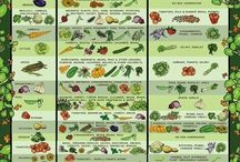 Gardening Vegetables & Fruits