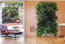 garden enhanced / by Holly Rushakoff
