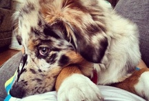 Animal Love =) / by Allie