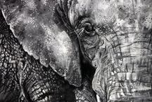 Endangered Animals / Charcoal Drawings of Animals that are listed as Endangered 2013