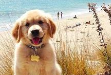 Animals and Pets / The cutest and the fluffiest on Pinterest!