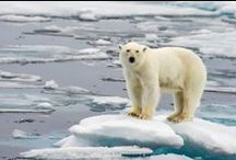 Arctic Cruises / Information on Arctic Cruises. What to Expect in Spitsbergen and lots more