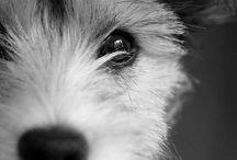 Dogs! / by Renee Kerby
