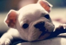 Totally adorablee :) / by Macie Gehrke