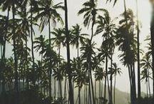 Cali / by Hailey Hammon
