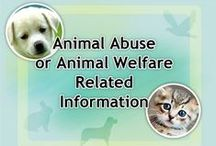 Animal Causes / Animal Welfare / Petitions, information about stopping cruelty against animals / by K. Fairbanks