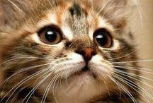 Kociaki / słodkie, zwinne, dzikie