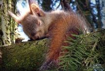 Nap Time / Shhhhhhhhh.........everybody's sleeping! / by Julie