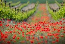 Fields of Flowers / by Julie