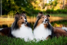 Like Two Peas in a Pod / by Julie