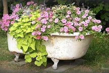Potted Colour / How inspiring it is to see how others have decorated their gardens, by growing plants and flowers in a variety of different containers, making it a display of lovely potted colour / by Julie
