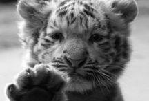 Animal Friends  / by Lynsey Maya