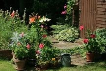 Cottage Garden / by Julie