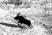 Animals / by Minnesota Historical Society