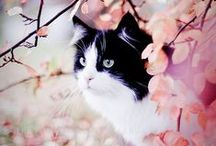 kitty cute. aww! / The cutest kitties and kittens on Pinterest! / by Careers for Your Cat