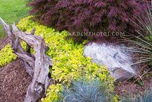 garden / flowers . plants . trees . landscaping / by Liz Lauck