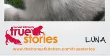 Honest Kitchen True Stories / Incredible improvements in pet health conditions