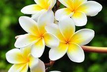 My Favorite Flowers / Natural Wonders / Beautiful Flowers