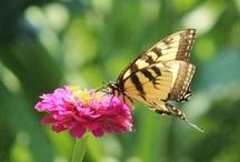 Flutterbys / by Rechelle Blank