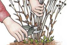 Yard & Plant Tips / by Rechelle Blank