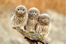 Owls are a Hoot / by Rechelle Blank