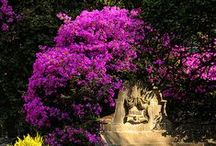 ~ Gardens & Plants ~ / Beautiful gardens, plants, and garden tips to keep them that way.
