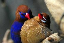 ~ Birds!!! ~ / My favorite animals, in a gallery of beautiful pictures.