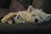 RORY and all things westies