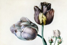 Botanical drawings / by Larissa van der Klip