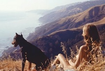 Big Sur dreaming / by Selena Nanopoulos