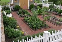Landscape, Garden, & Outdoor-Living Ideas / by Kelly Riley