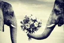 Elephants / by Wendy Wilson