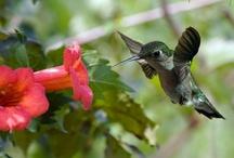 Birds / by Karen Rickel