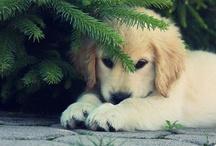 Dogs / by Cygnus Jim