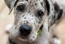 Puppy love <3 / by Maecy Charleston