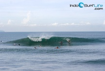Daily Surf Reports