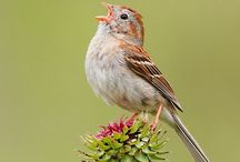Nature - Vogels